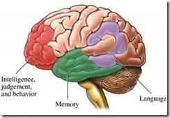 brain function segments