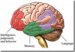 brain function segments