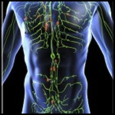 lymphatic system1