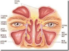 sinus-congested