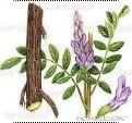 ZhiGanCao-liquorice plant-02